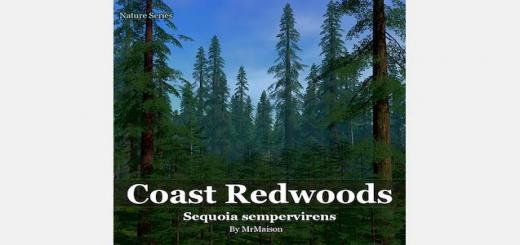 coast-redwoods-520×245