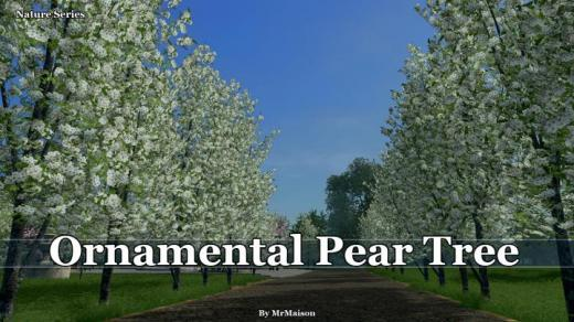 ornamental-pear-tree-thumb