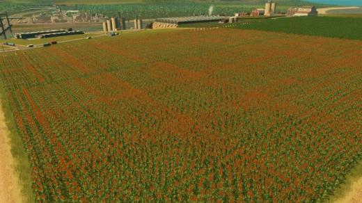 sorghum-field-8211-12-215-12-8211-industries-dlc-thumb