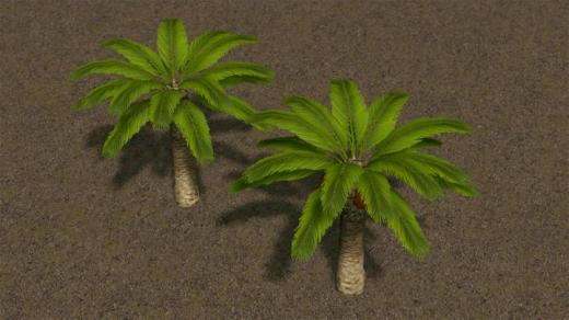 date-palm-tree-pack-thumb