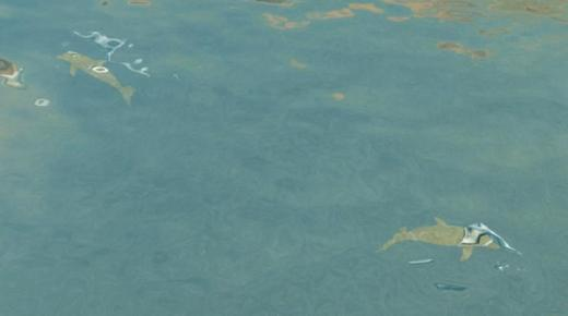 Photo of Cities: Skylines – Dolphin Spawn