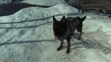 Photo of Fallout 4 – Frost Dogmeat